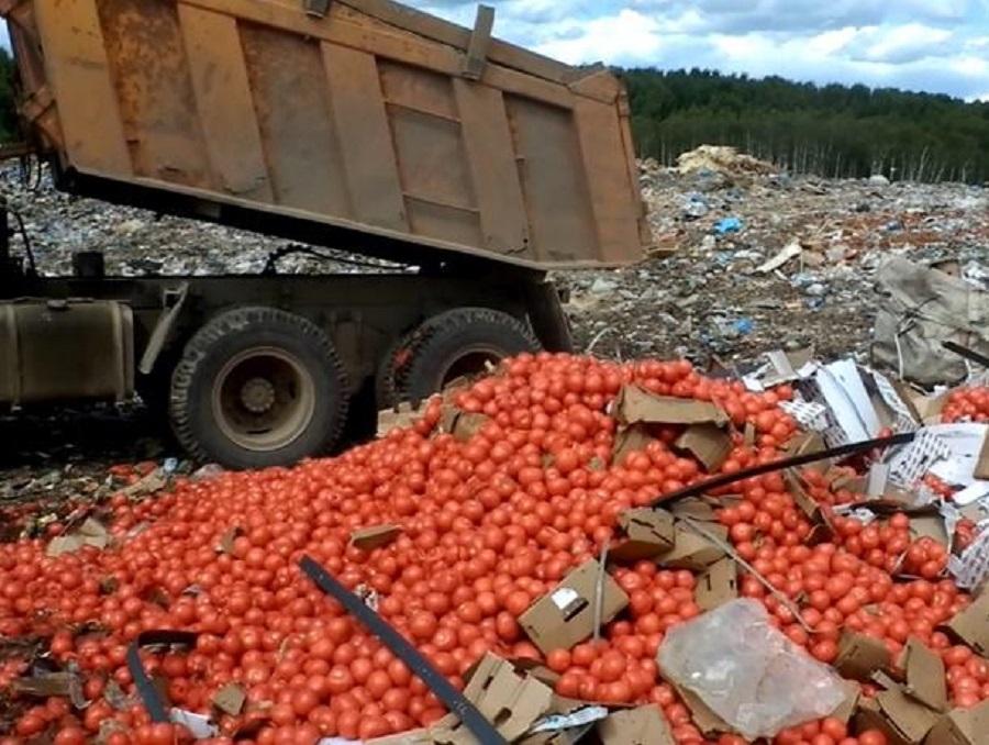 20 тонн зараженных томатной молью помидоров