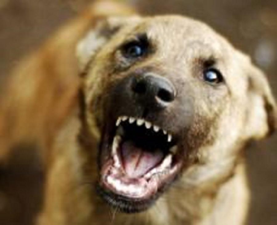 Дворовый пес погрыз будку и укусил хозяина