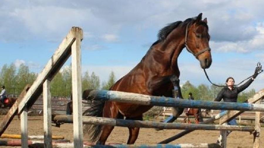 На конюшне 11-летнюю девочку затоптала лошадь