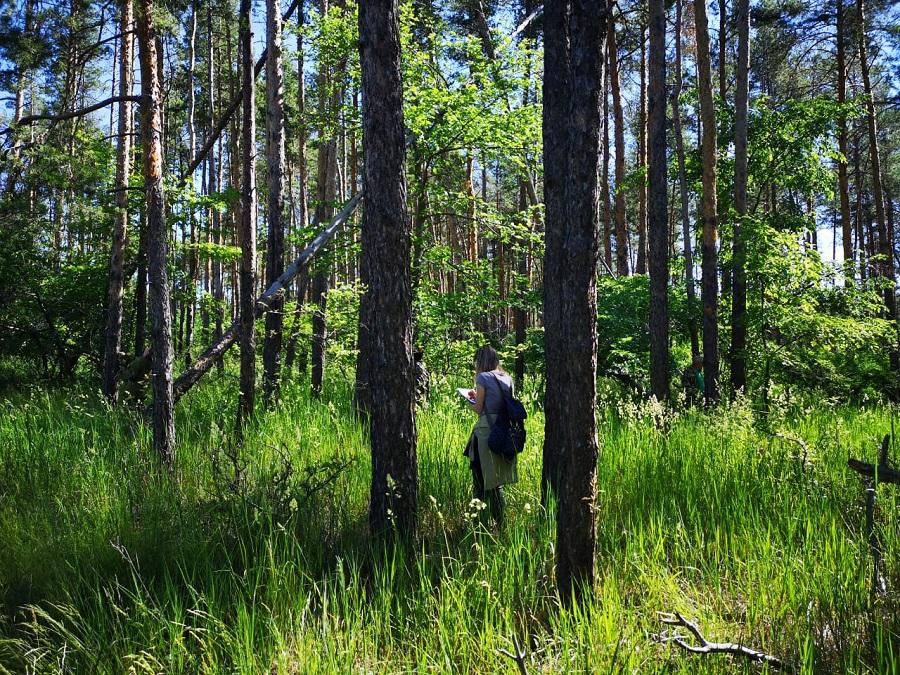 Приступили к обследованию донских лесов