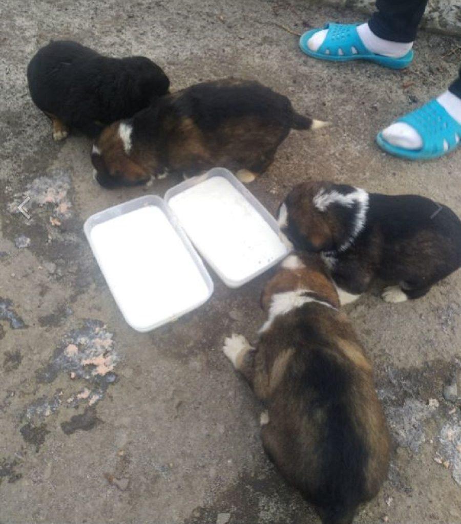 Возле озера в канаве нашли мешок с щенятами