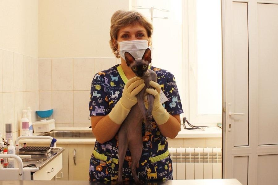 На Дону проходят льготная стерилизация животных-компаньонов