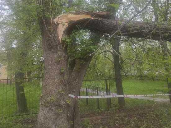 Пенсионерку катавшуюся на велосипеде убило деревом