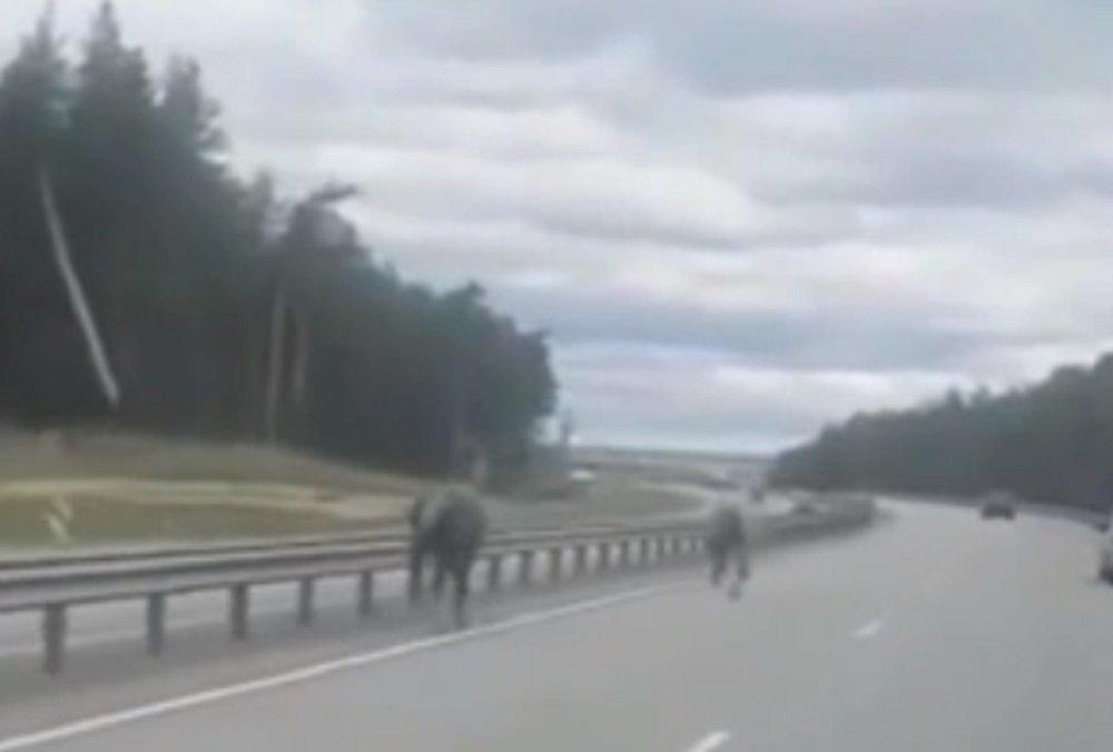 На трассе М-4 «Дон» едва не спровоцировали ДТП бесхозные кони