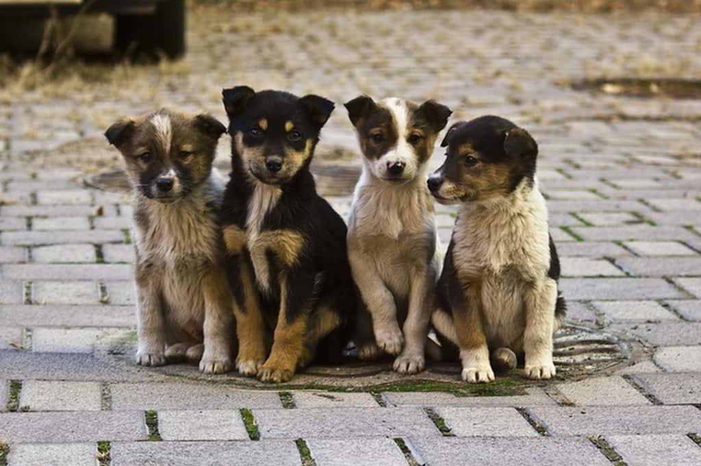 В России ужесточат наказание за выброшенных домашних животных
