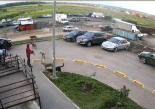 Задержан мужчина, на глазах у детей расстрелявший собак