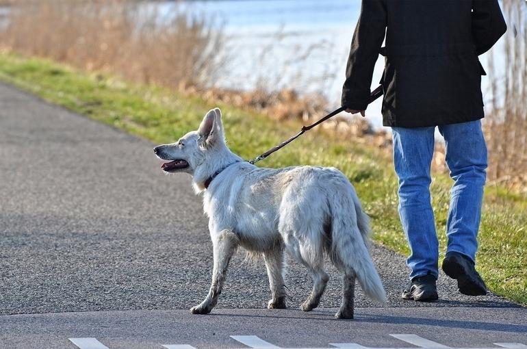 Для владельцев животных хотят разработать правила посещения общественных мест